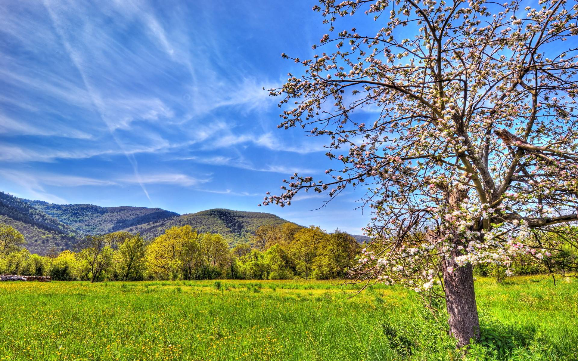 spring trees background - photo #20