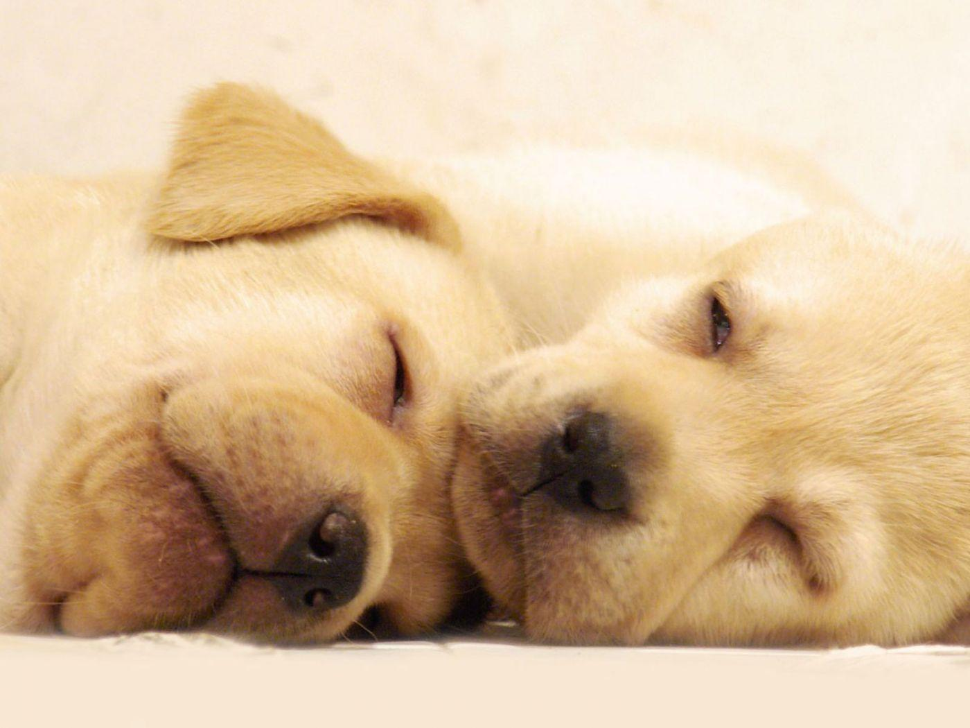 Wallpapers Cute Dogs Nature Animals Puppies