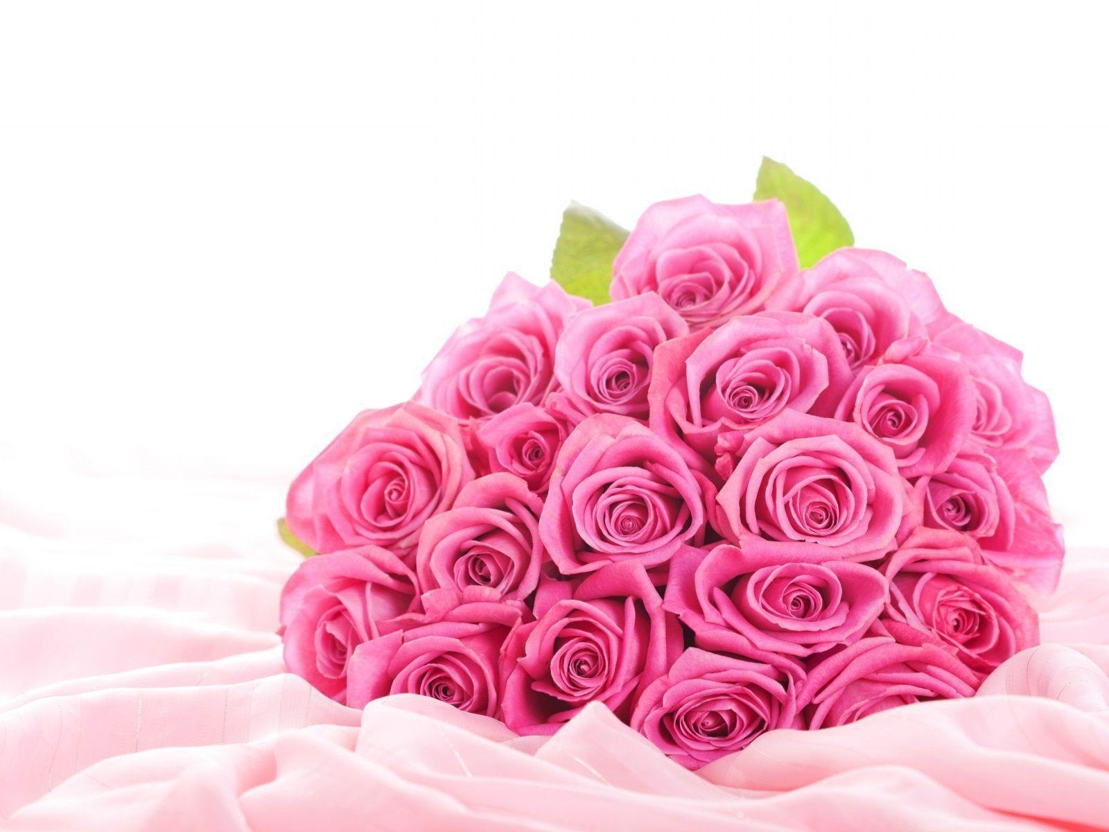 Cute Pink Rose Wallpaper Backgrounds Wallpapers