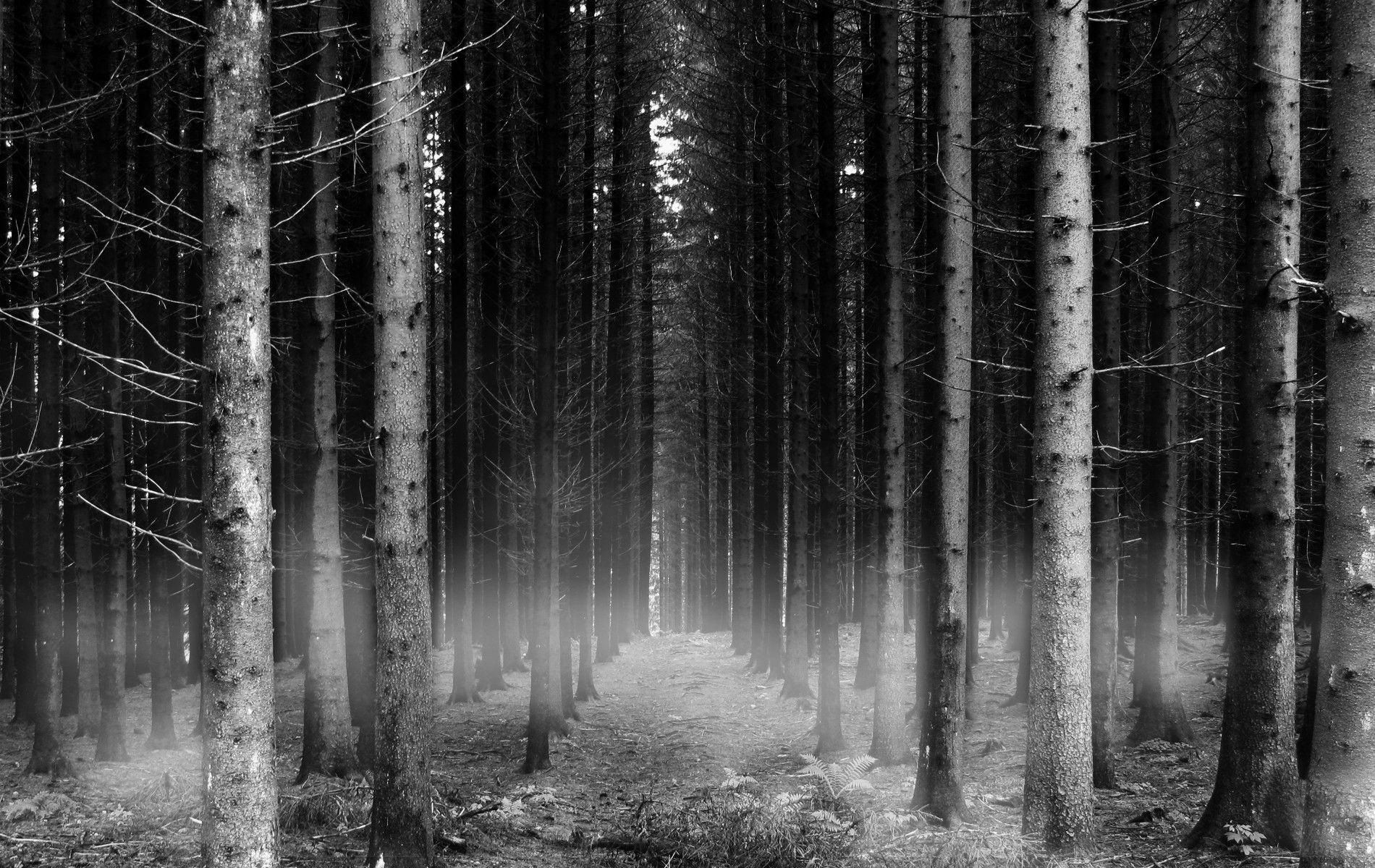 Wallpapers For > Forest Backgrounds Black And White