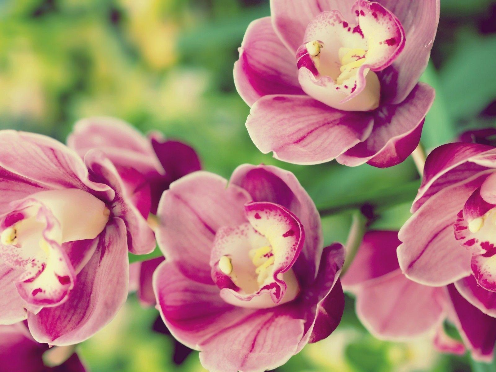 Exotic Flowers Wallpapers  Wallpaper Cave