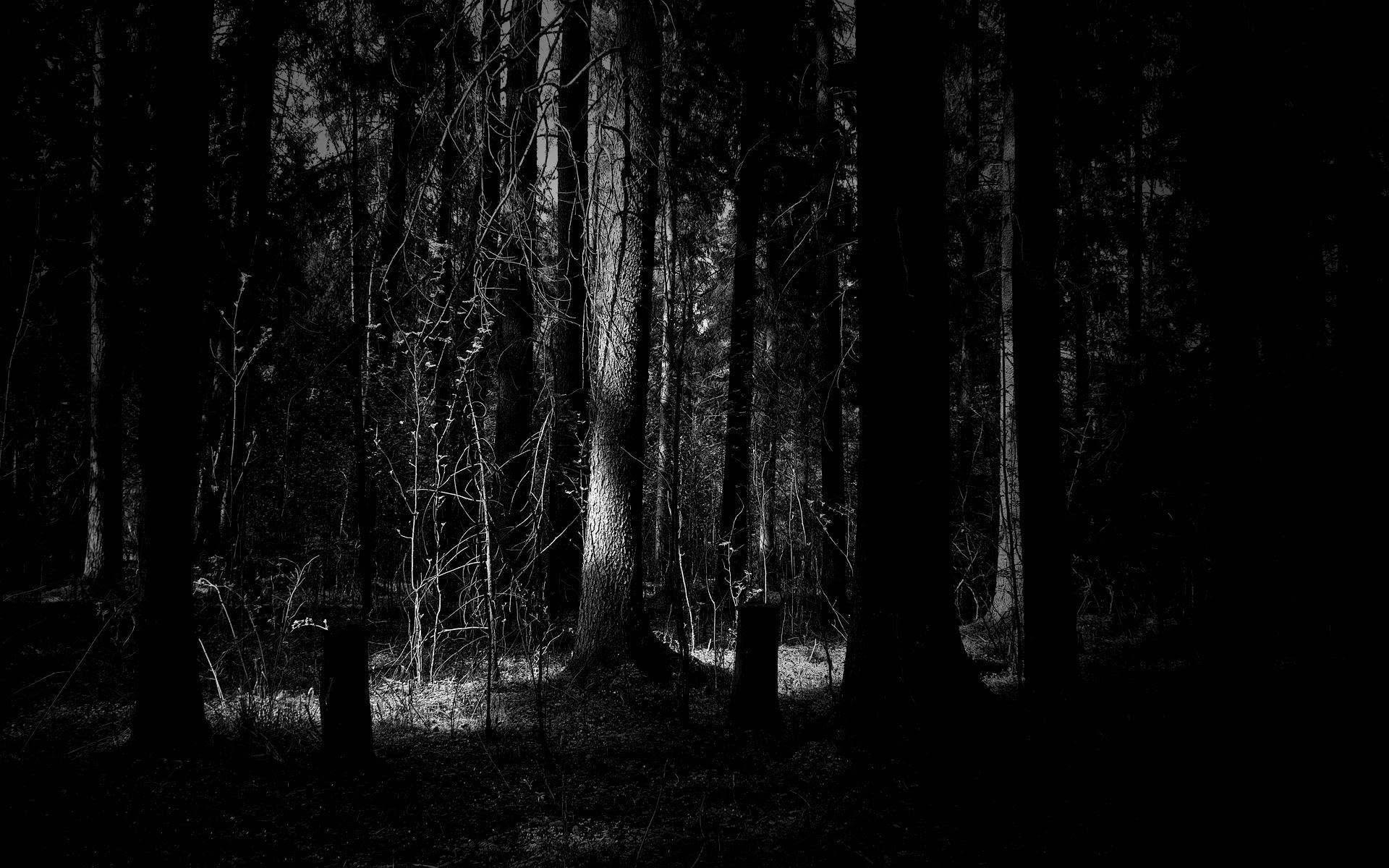 Dark Forest Desktop HD Wallpaper - HD Wallpapers