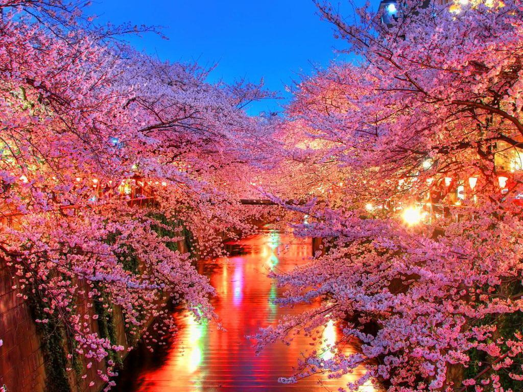 Wallpaper Nature Beauty Pink Hd Pictures 4 HD Wallpapers