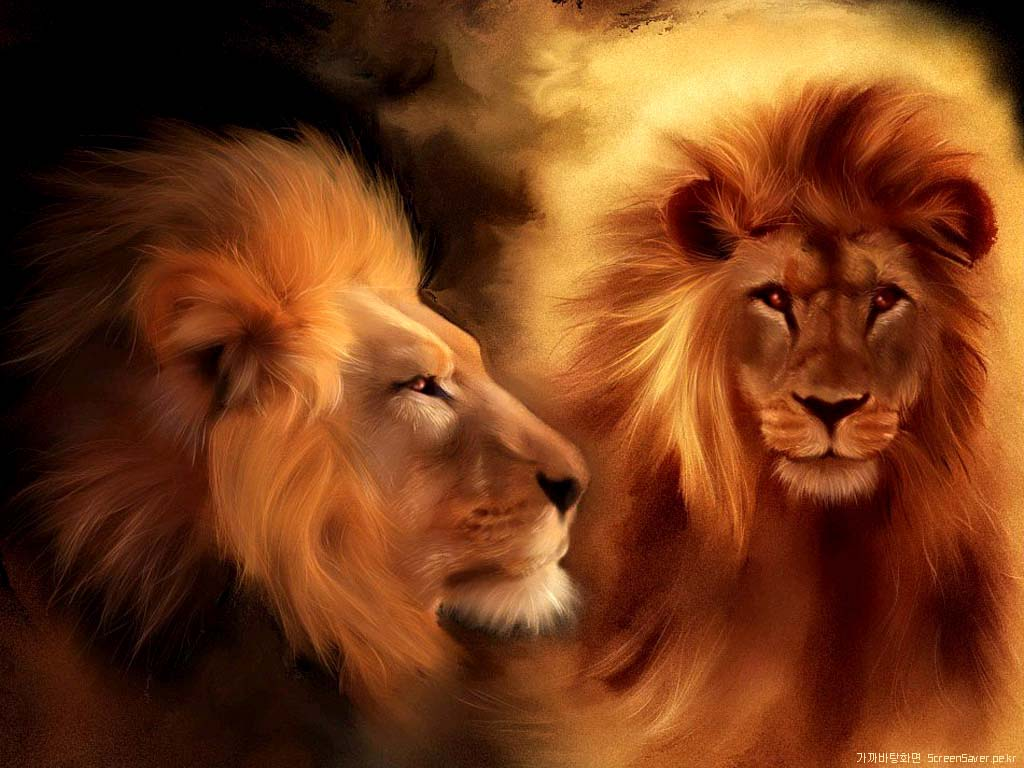 Animals For > Lion Wallpaper 3d