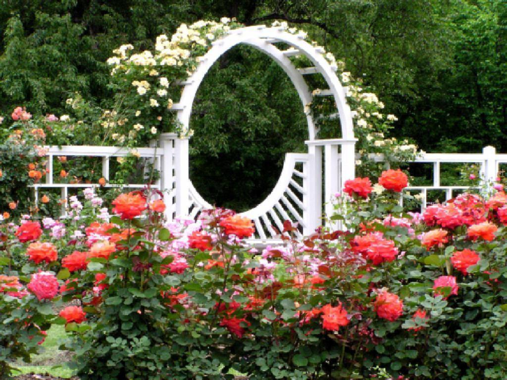 Rose garden wallpapers wallpaper cave for Garden design with roses