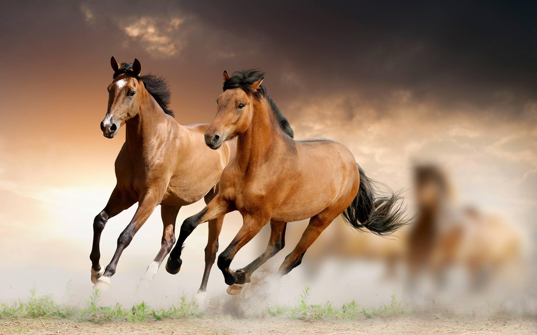 Hd wallpaper horse - Running Horse Hd Wallpaper Download High Quality Wallpaper