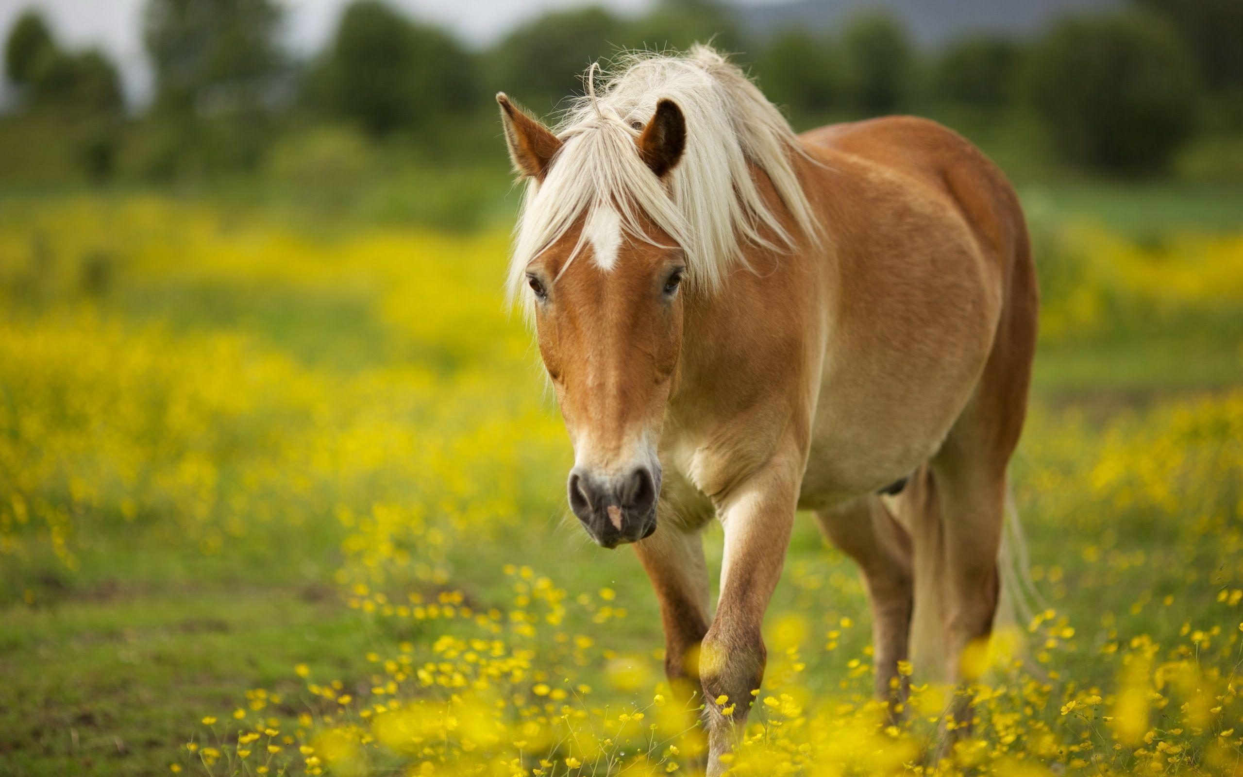 spring wild horse wallpaper - photo #23