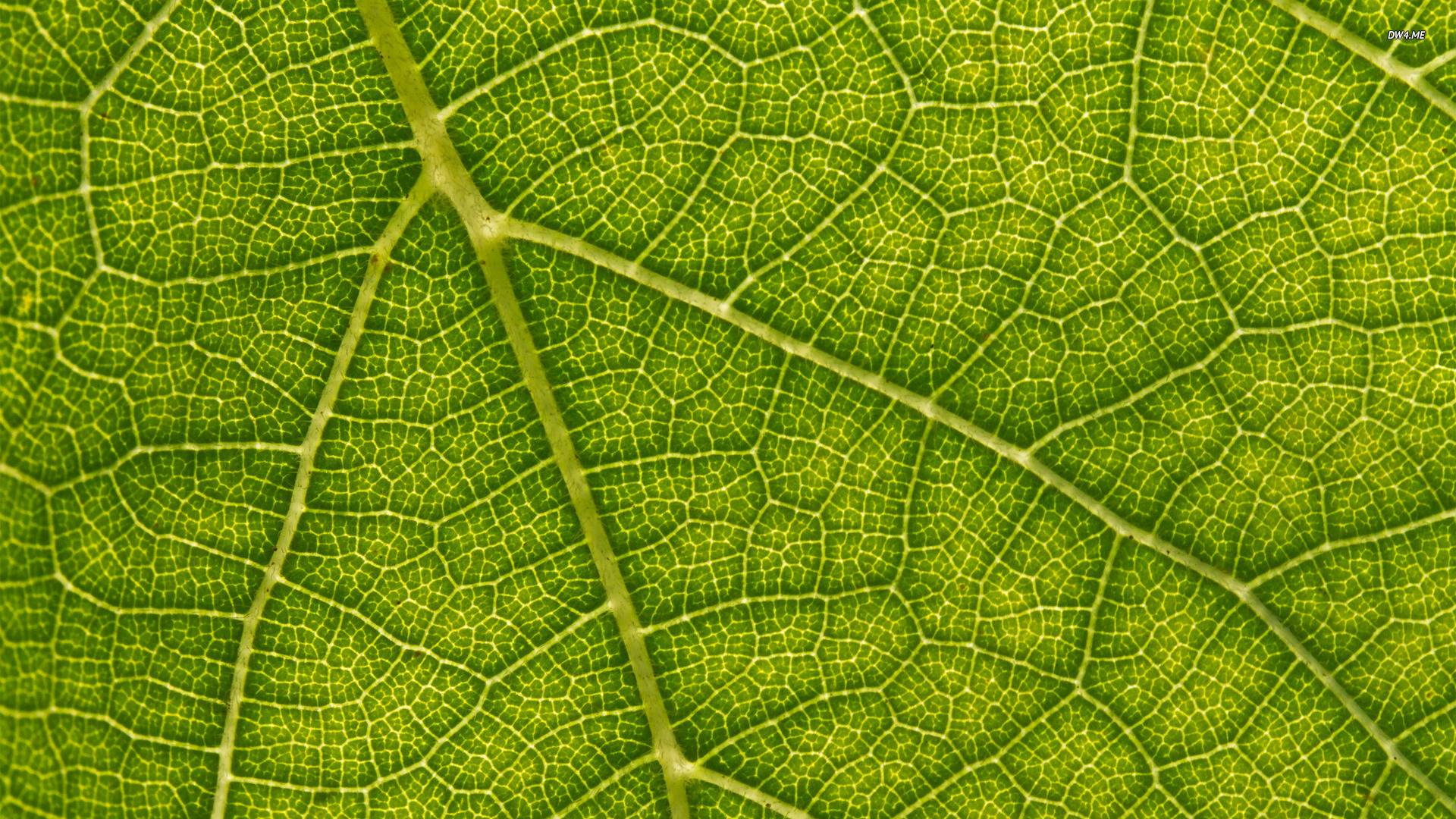 leaf background wallpaper - photo #14