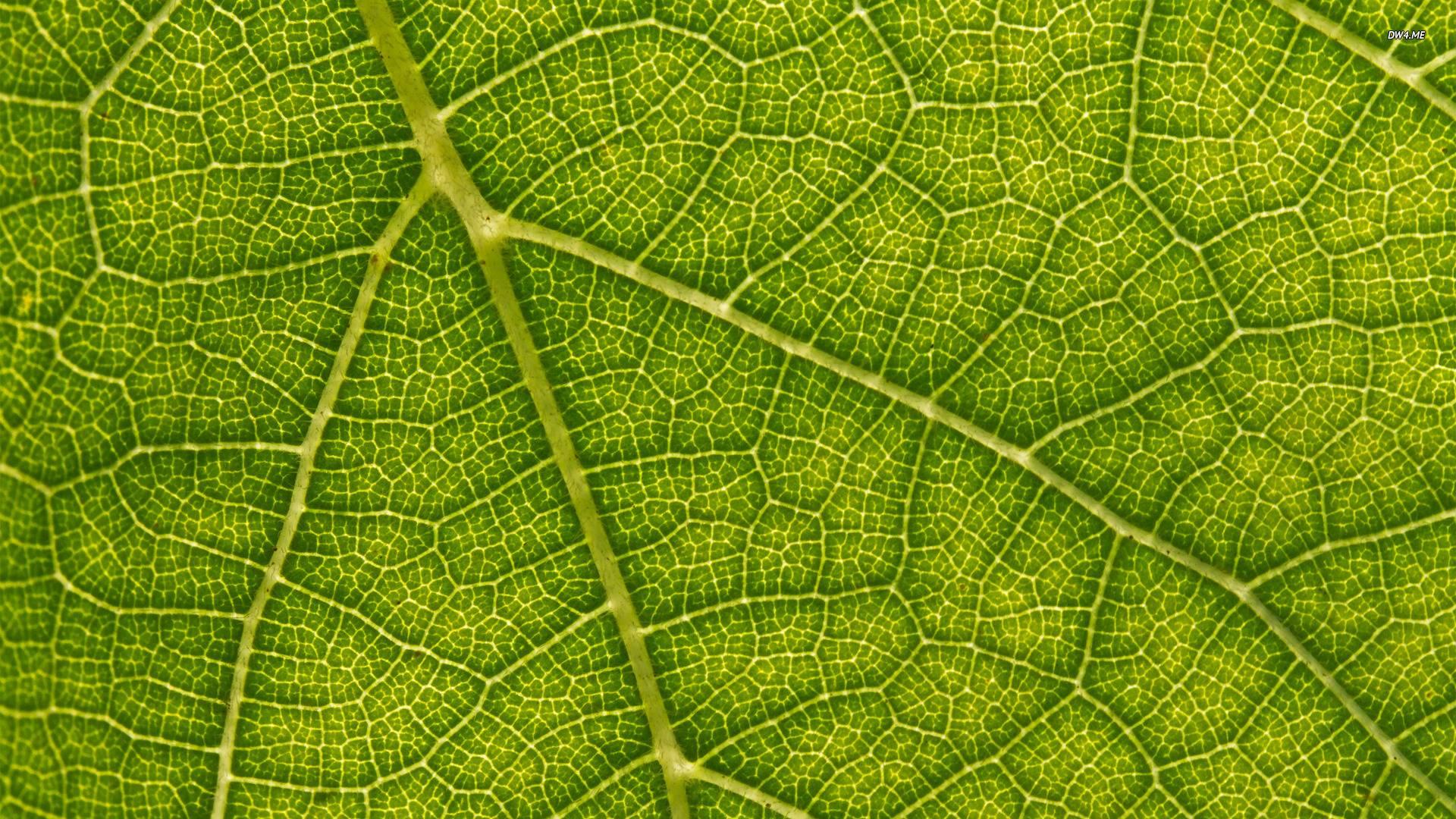 Nature Design Pattern