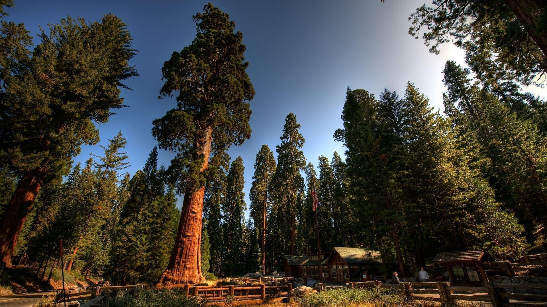 4k wallpaper nature redwoods - photo #7