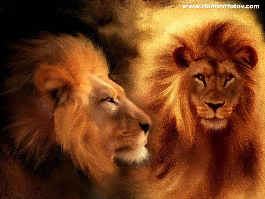 Wallpapers For > Roaring Male Lion Wallpaper