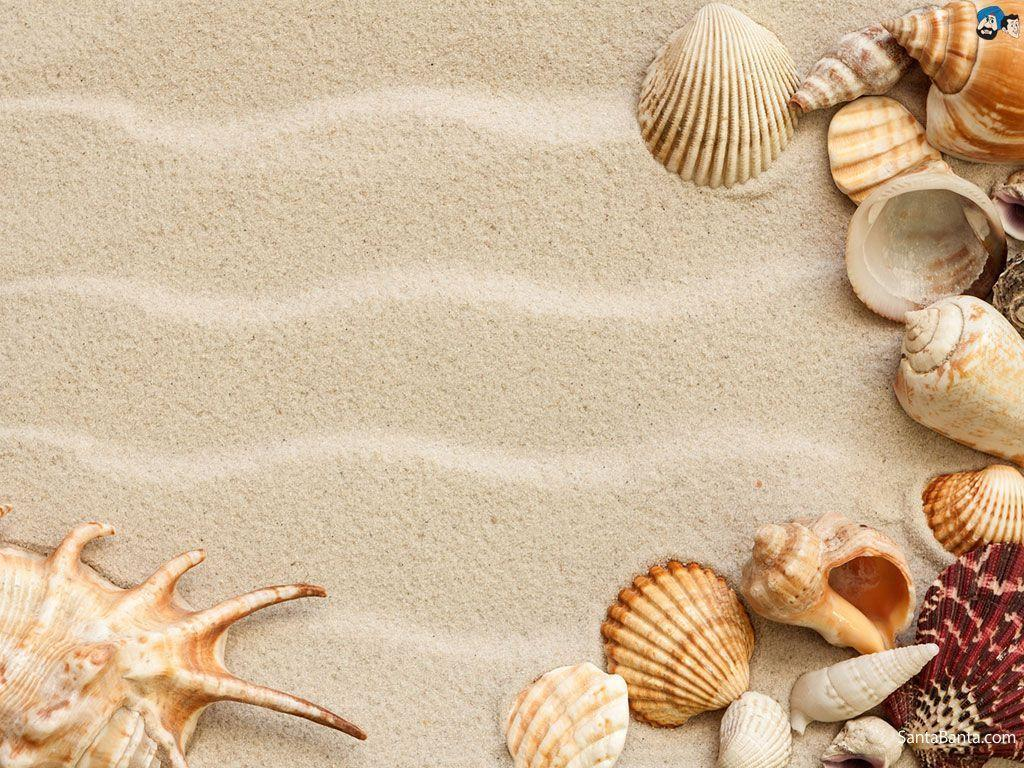 seashell wallpapers wallpaper cave. Black Bedroom Furniture Sets. Home Design Ideas