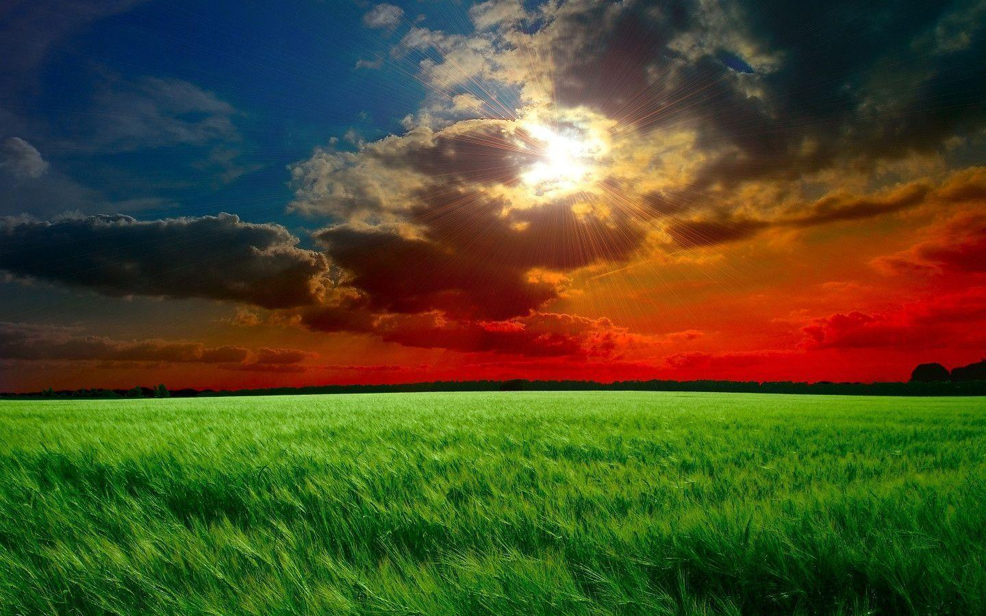 1440x900 Red sunset fields Wallpapers