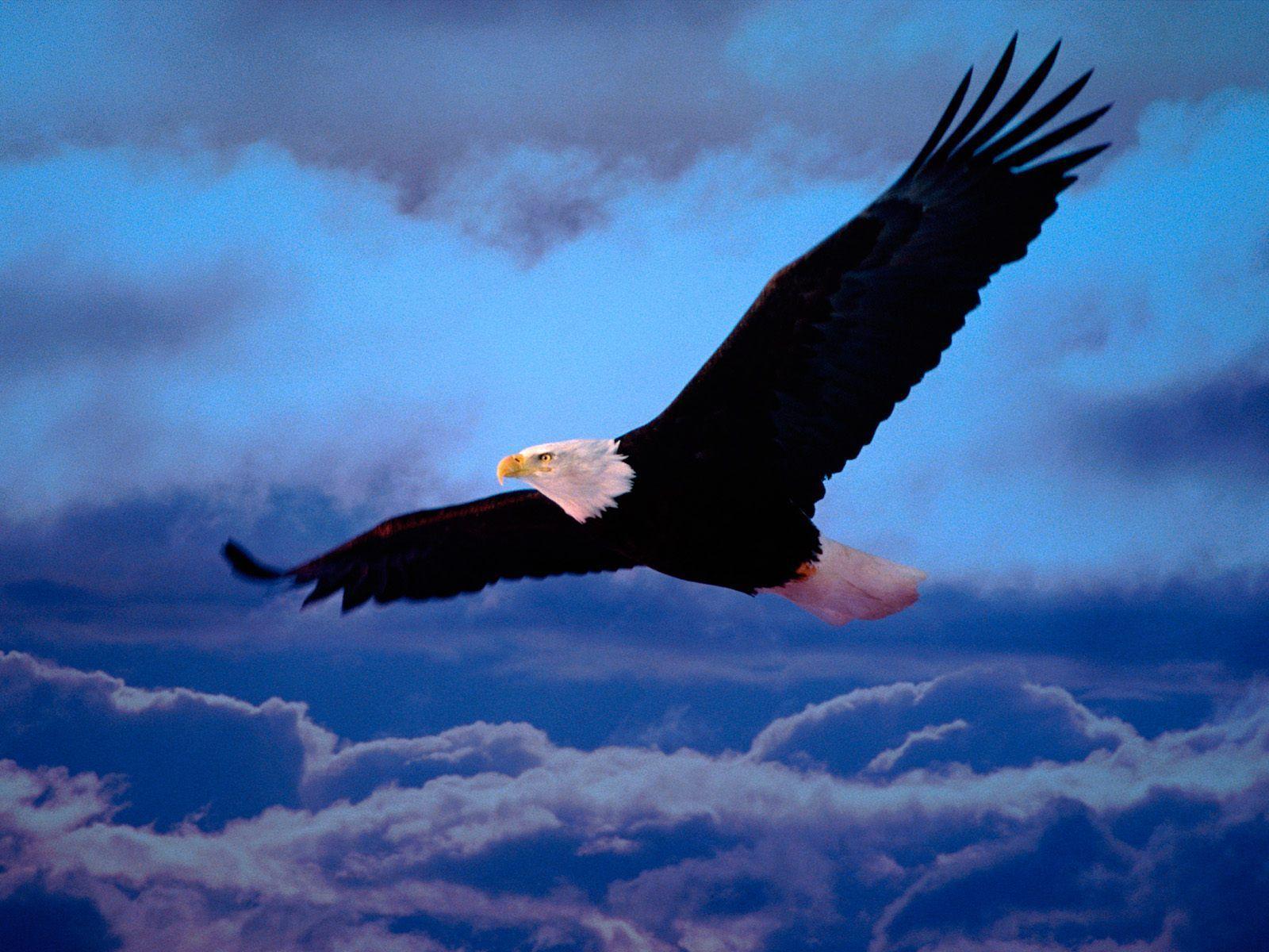 Animals For > Eagles Logo Wallpaper Hd