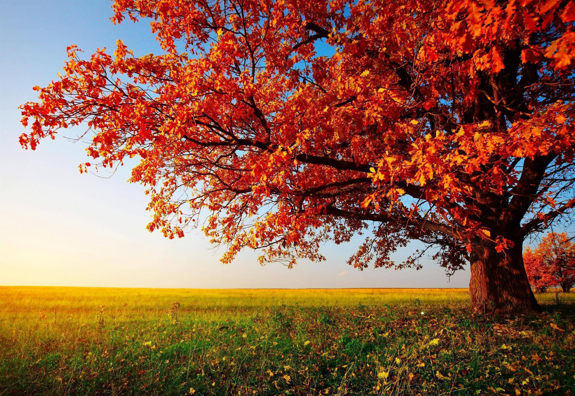 Fall Trees Wallpapers ...