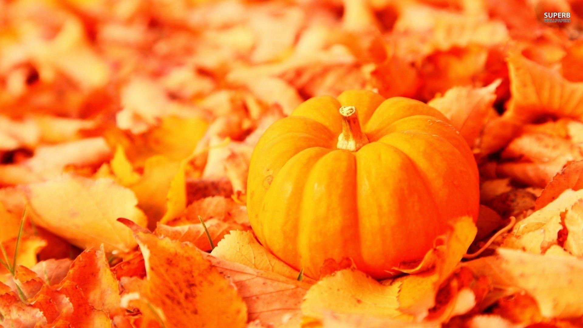 Pumpkin wallpapers wallpaper cave - Fall wallpaper pumpkins ...