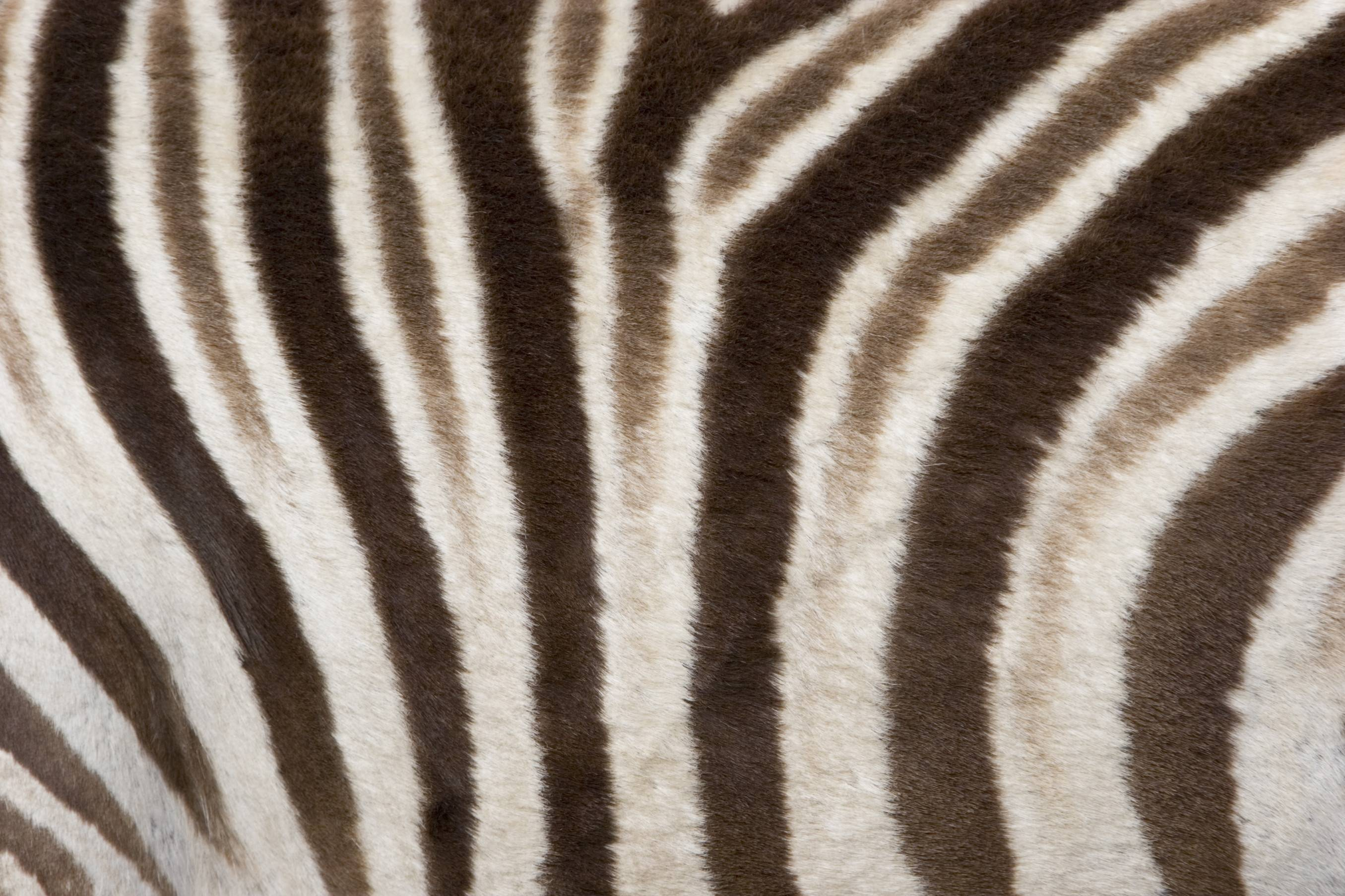 this animal print desktop - photo #21