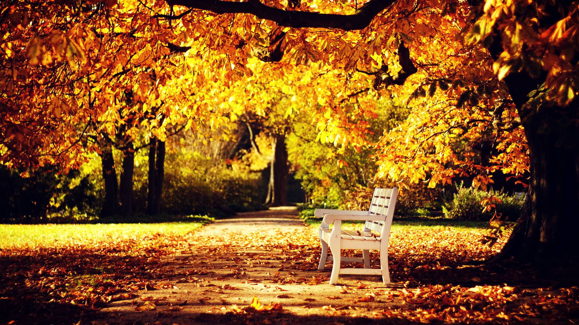 42 Autumn Backgrounds Download Free Stunning Hd: HD Autumn Wallpapers