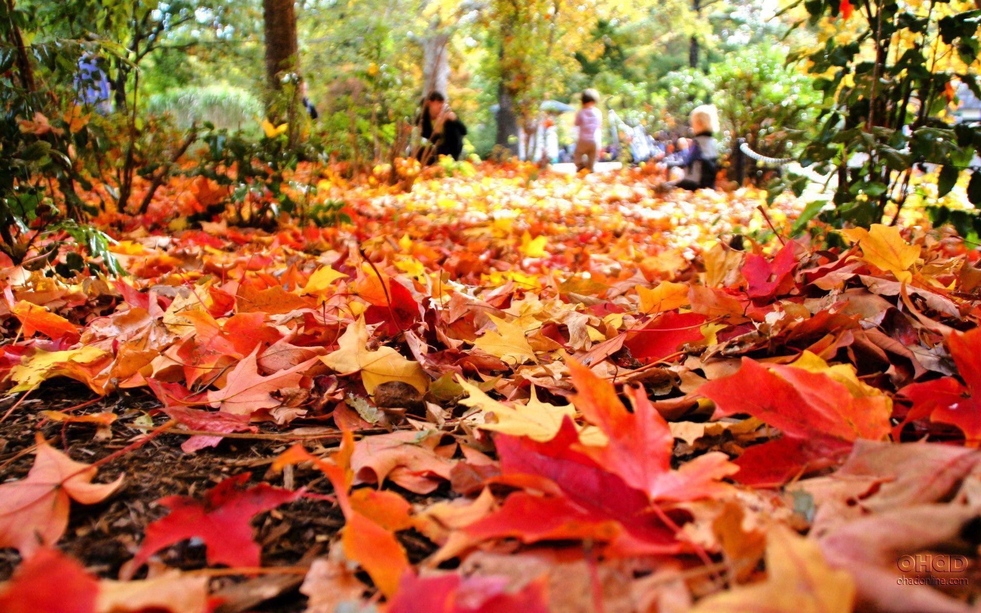 Fall Foliage Desktop Wallpapers - Wallpaper Cave