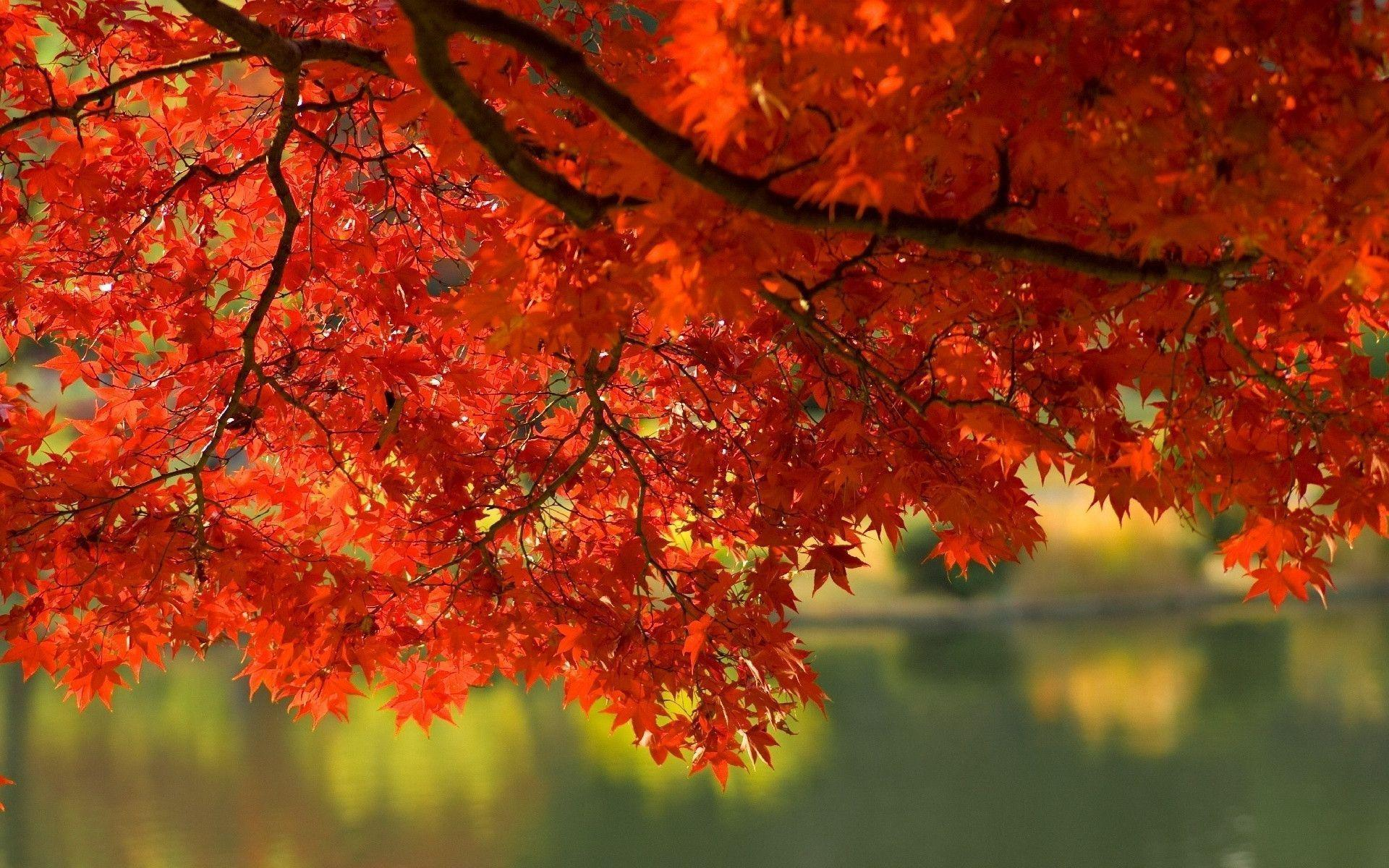 wallpapers fall leaves wallpaper cave