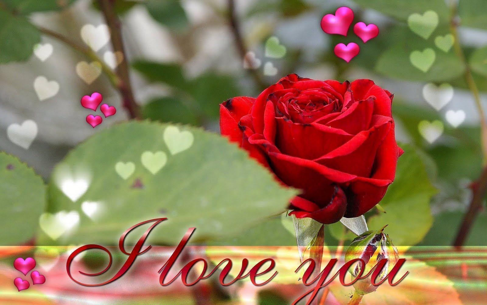 I Love You Images Wallpapers ...