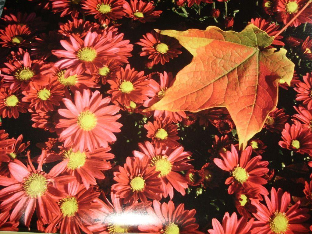fall flowers wallpaper by -#main