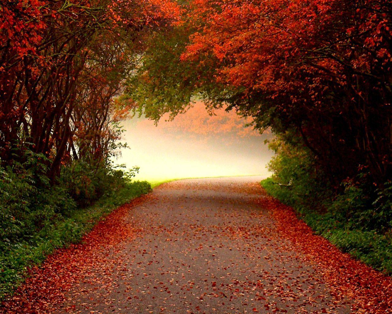 Free Autumn Desktop Wallpaper Backgrounds Wallpaper Cave