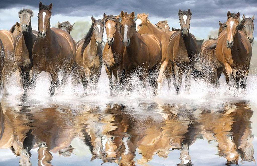 spring wild horse wallpaper - photo #24