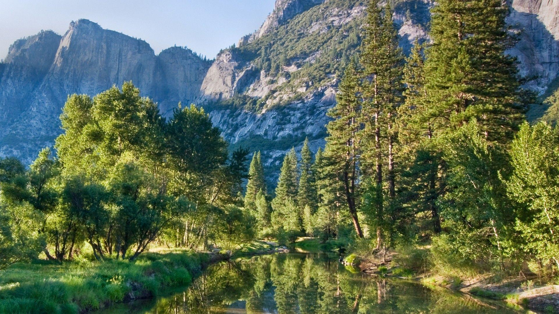 mountains pine trees - photo #3