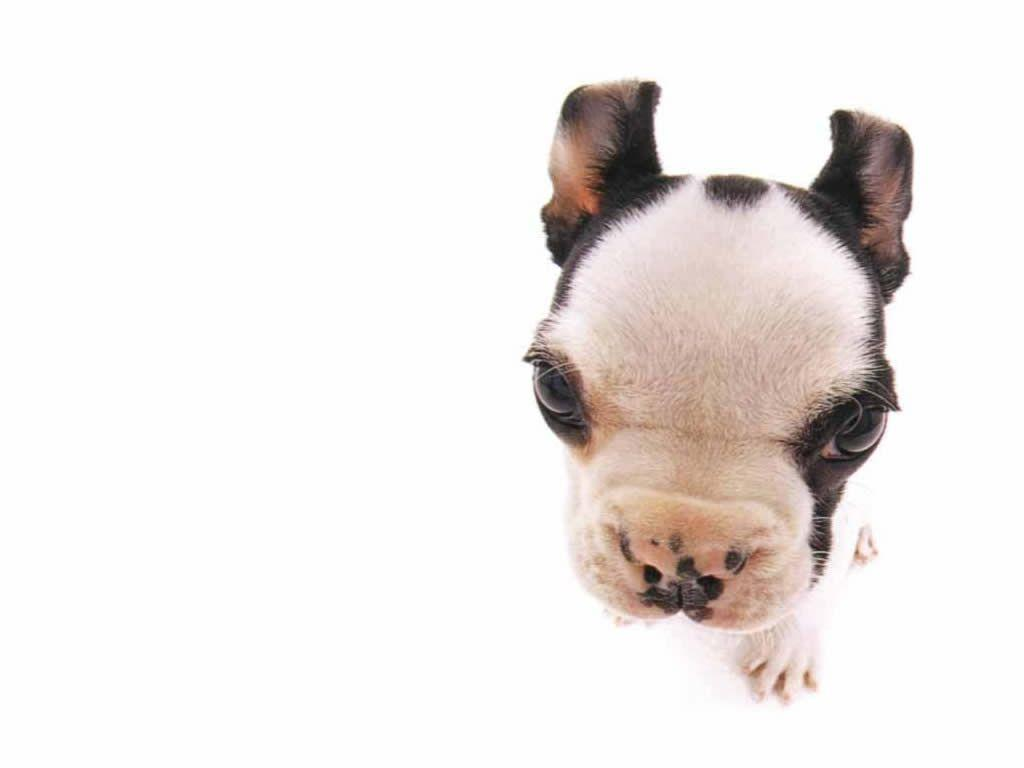 funny puppy wallpapers wallpaper cave