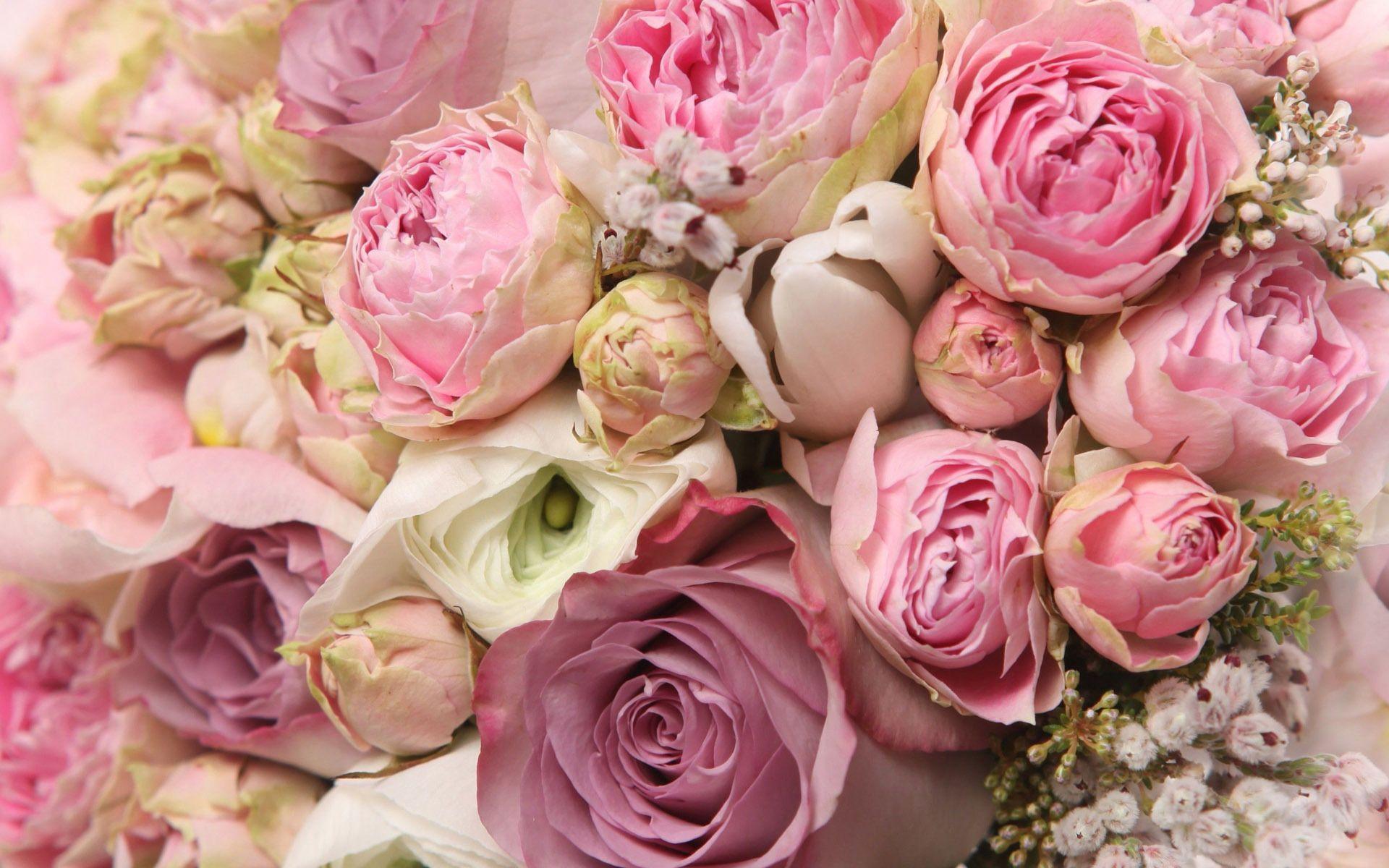 Изумительные розовые и алые розы на