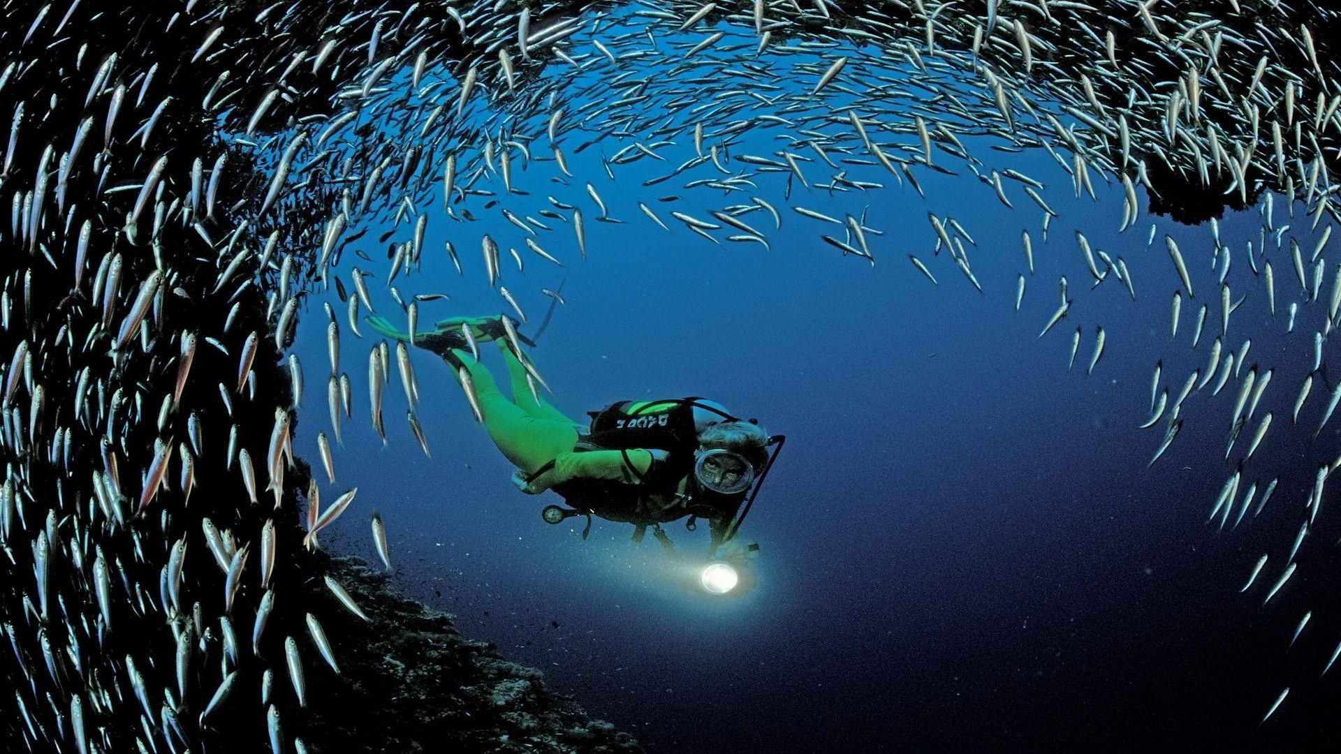scuba diving wallpaper wallpapers - photo #10