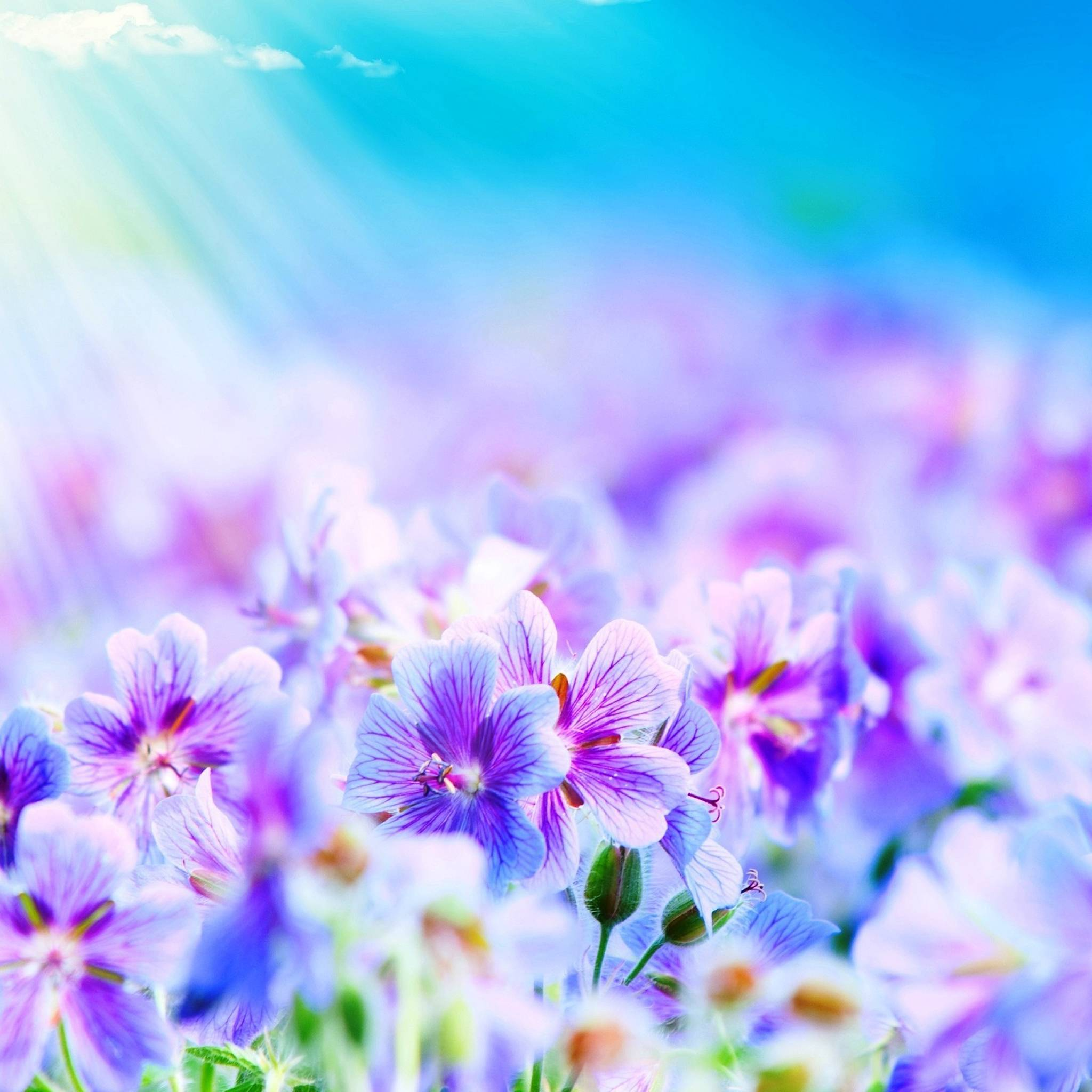 Purple Flowers IPad Air Wallpaper Download