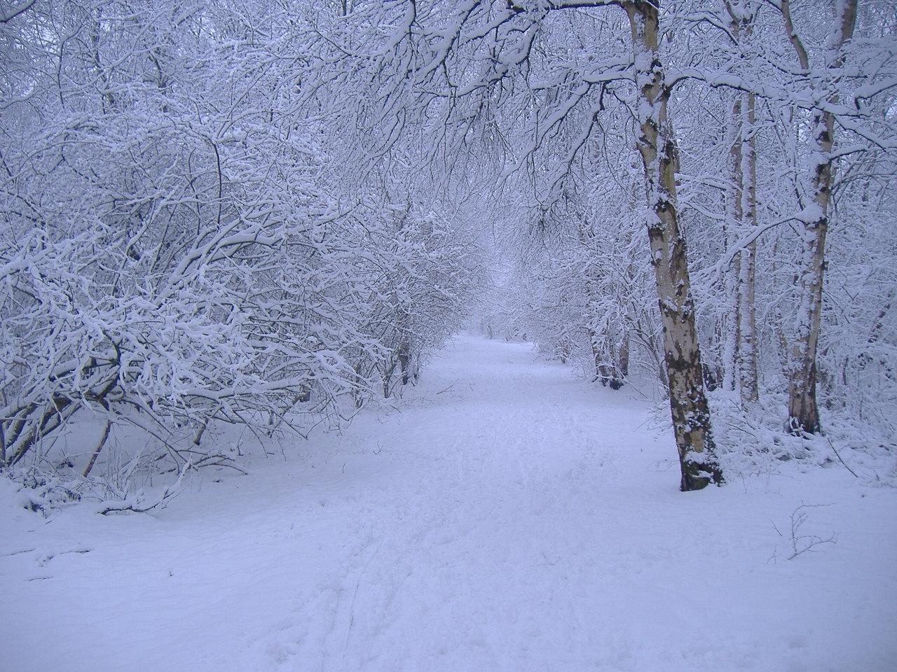 winter backgrounds scenes wallpaper cave