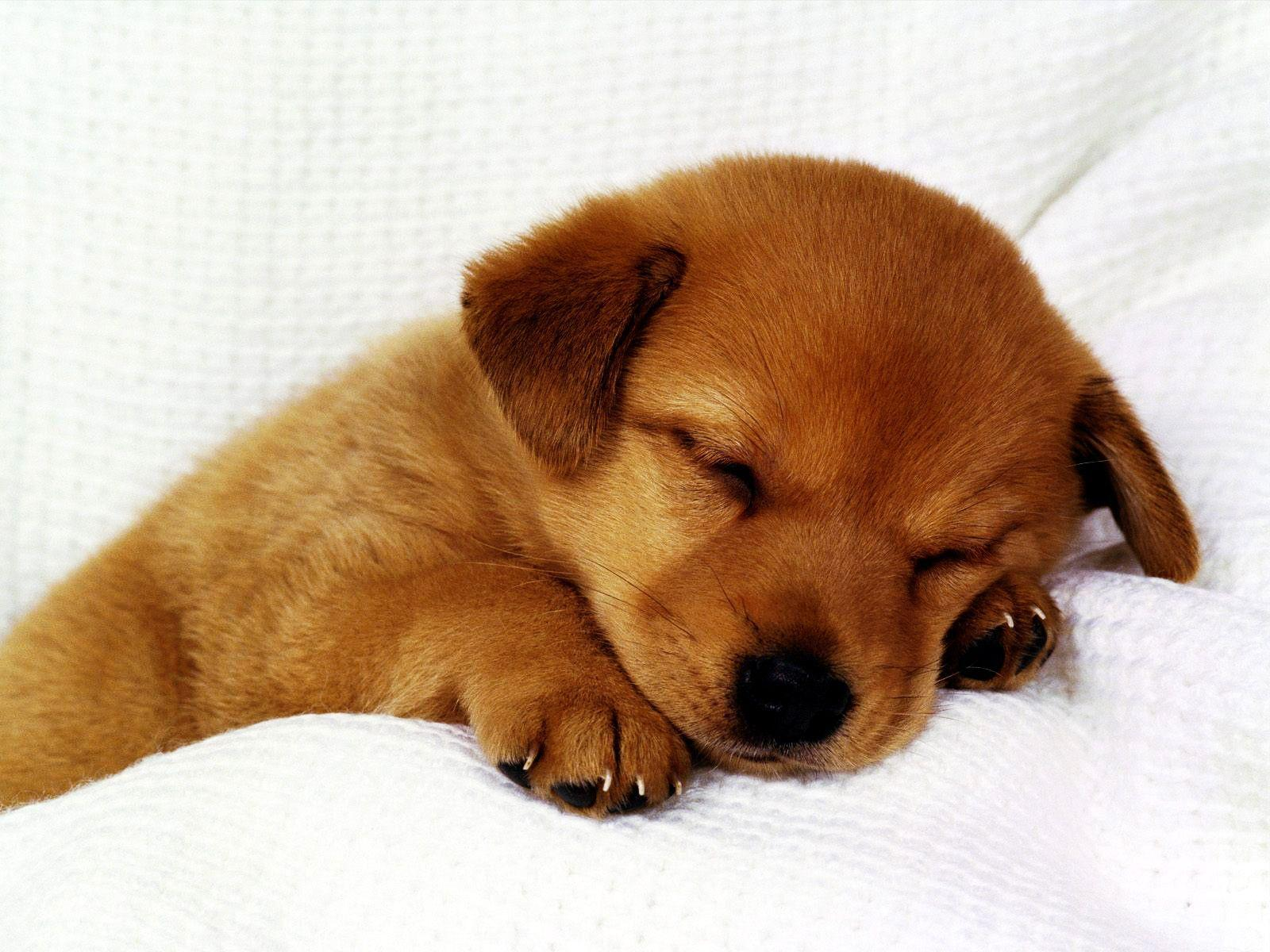 Cute Puppies Wallpapers Hd Wallpaper Cave
