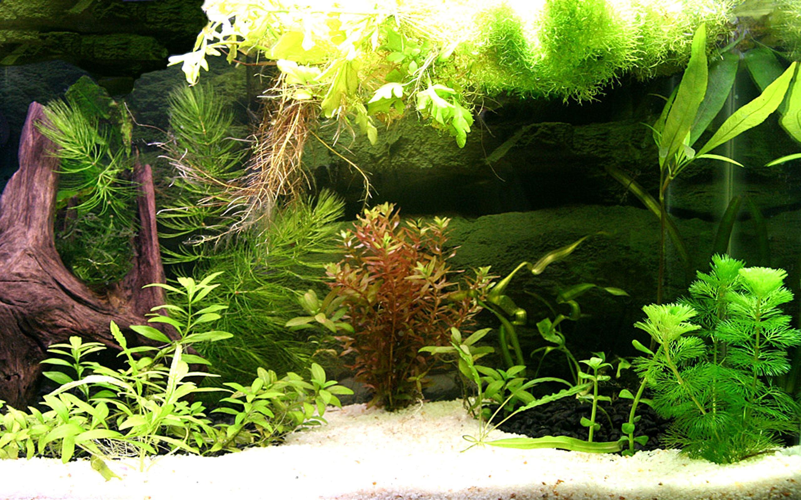 aquarium backgrounds pictures wallpaper cave. Black Bedroom Furniture Sets. Home Design Ideas