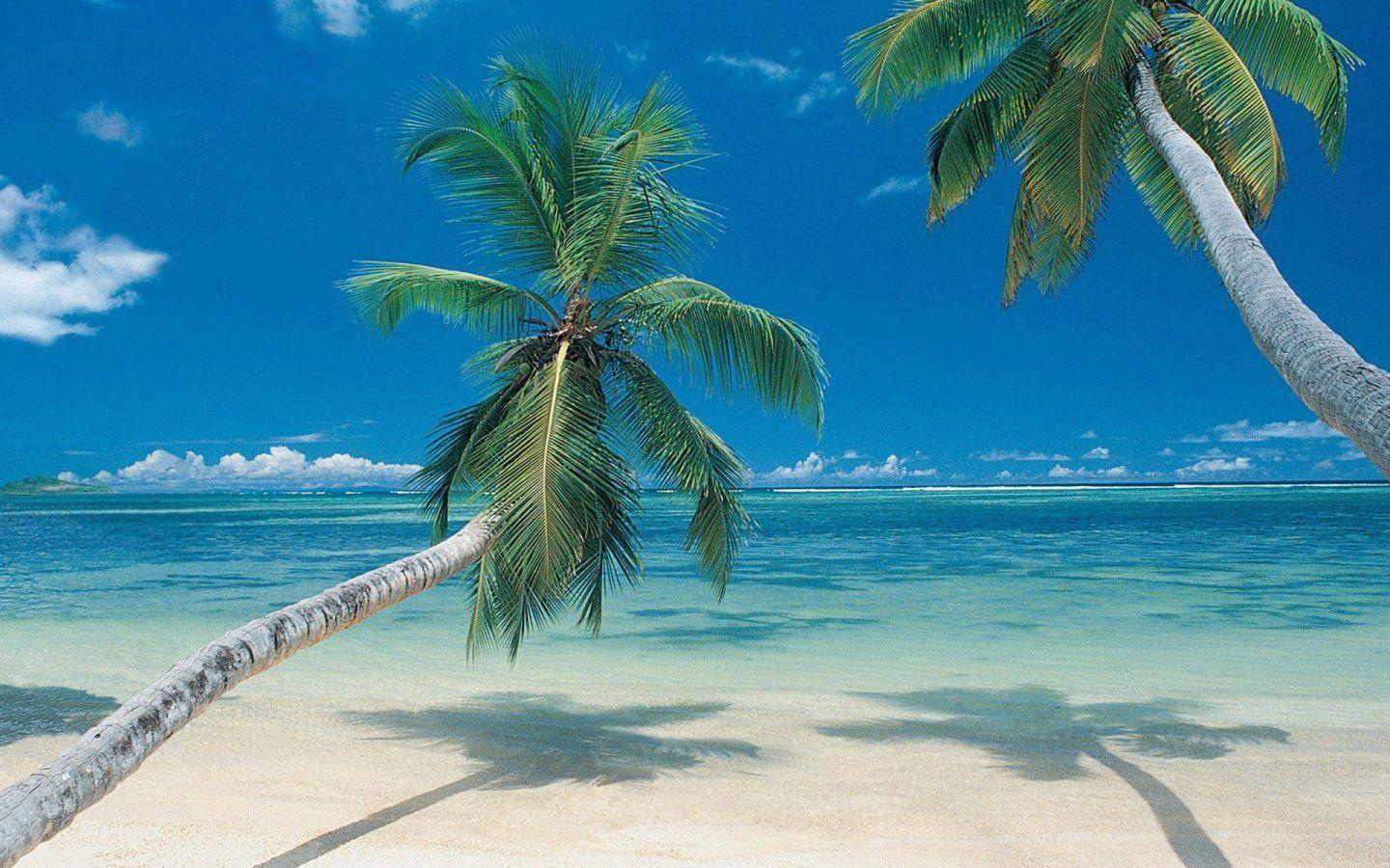 Palm tree beach wallpapers wallpaper cave - Palm tree wallpaper for android ...