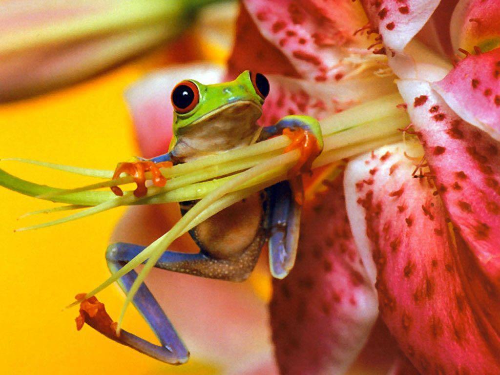 Frog Wallpapers - Wallpaper Cave