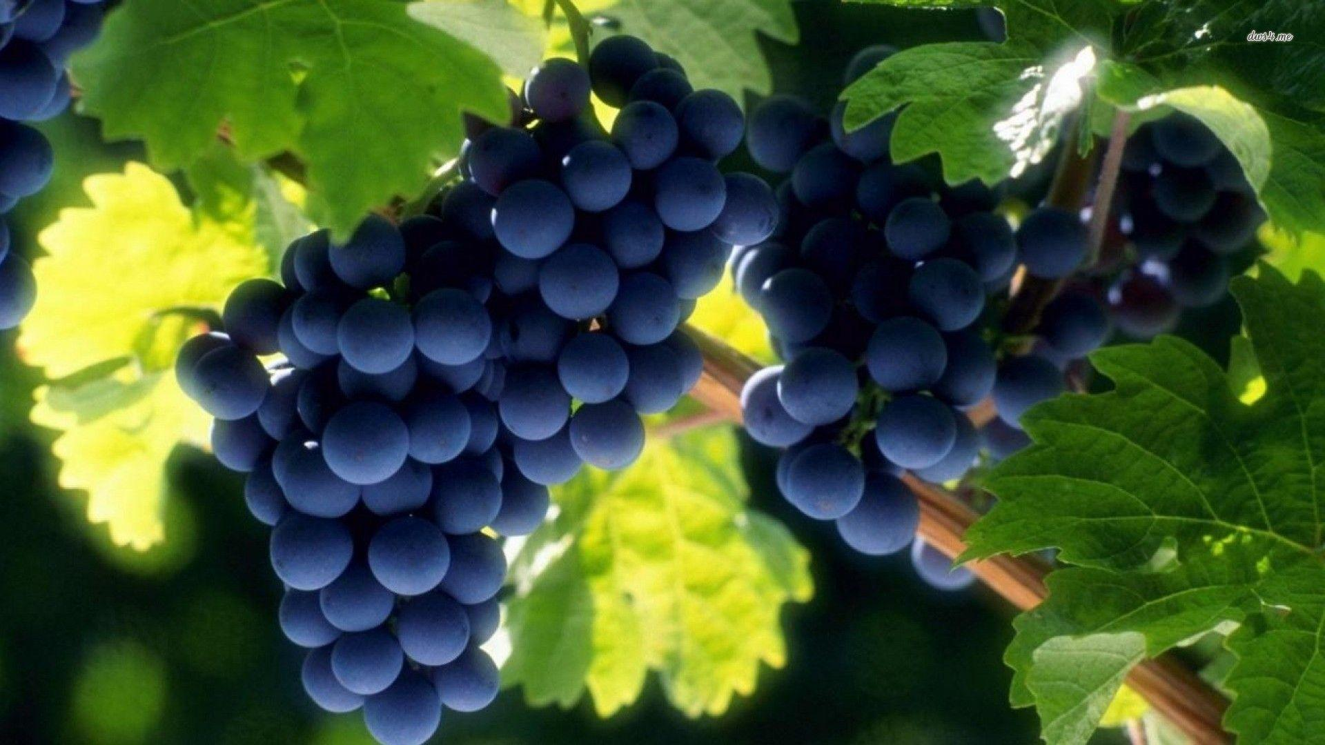wallpapers grapes wallpaper cave