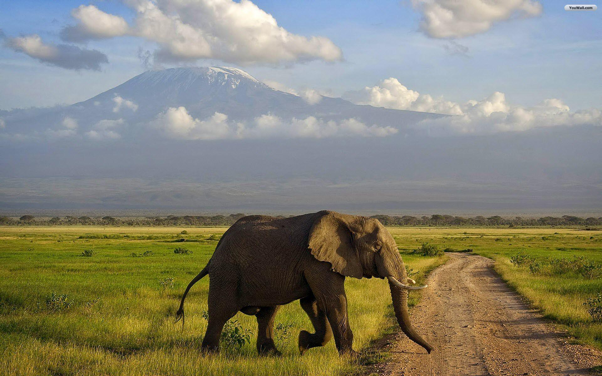 Elephant Landscape Wallpapers Beautiful Wallpapers
