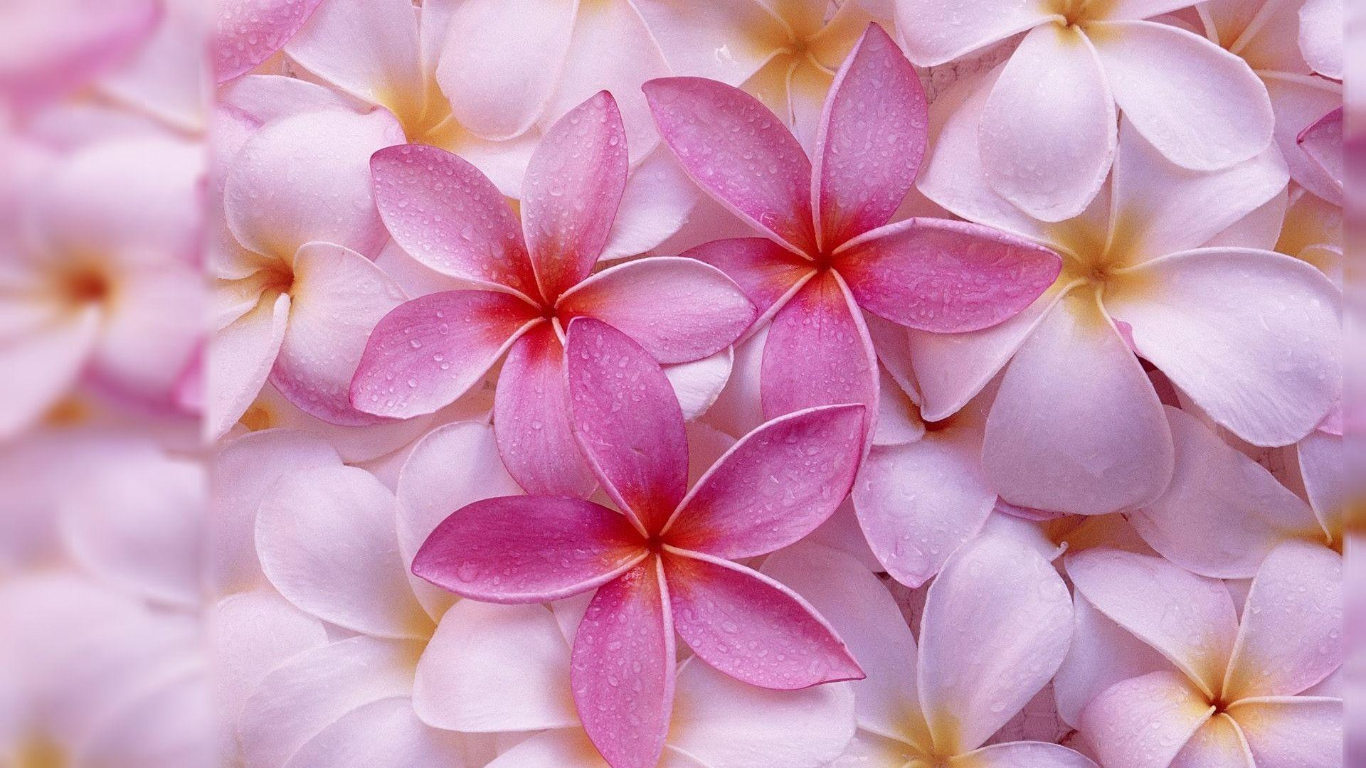 Computer Backgrounds Flowers