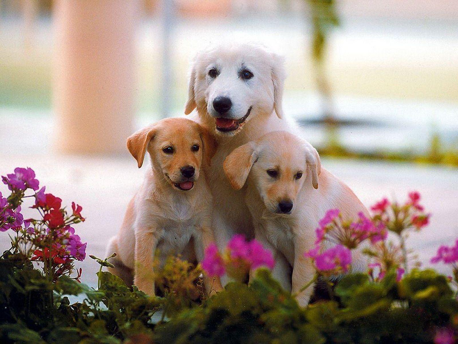 Sweet Dogs Wallpaper Cute Dog Wallpapers - ...