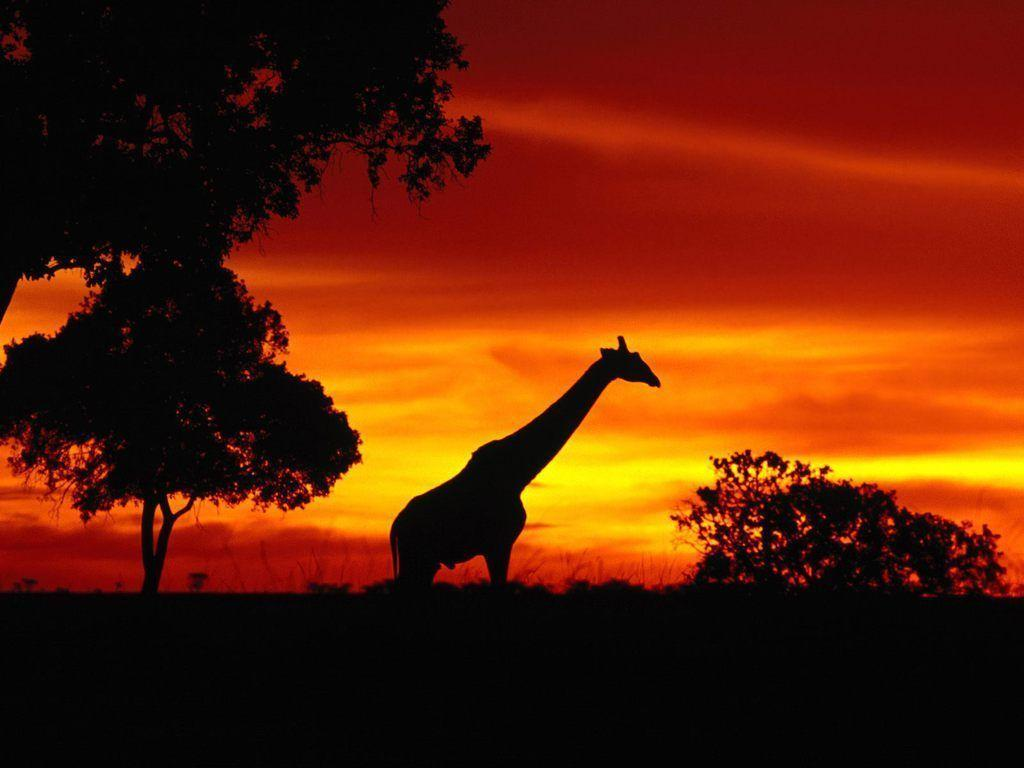 Animals For > African Animals Sunset Wallpaper