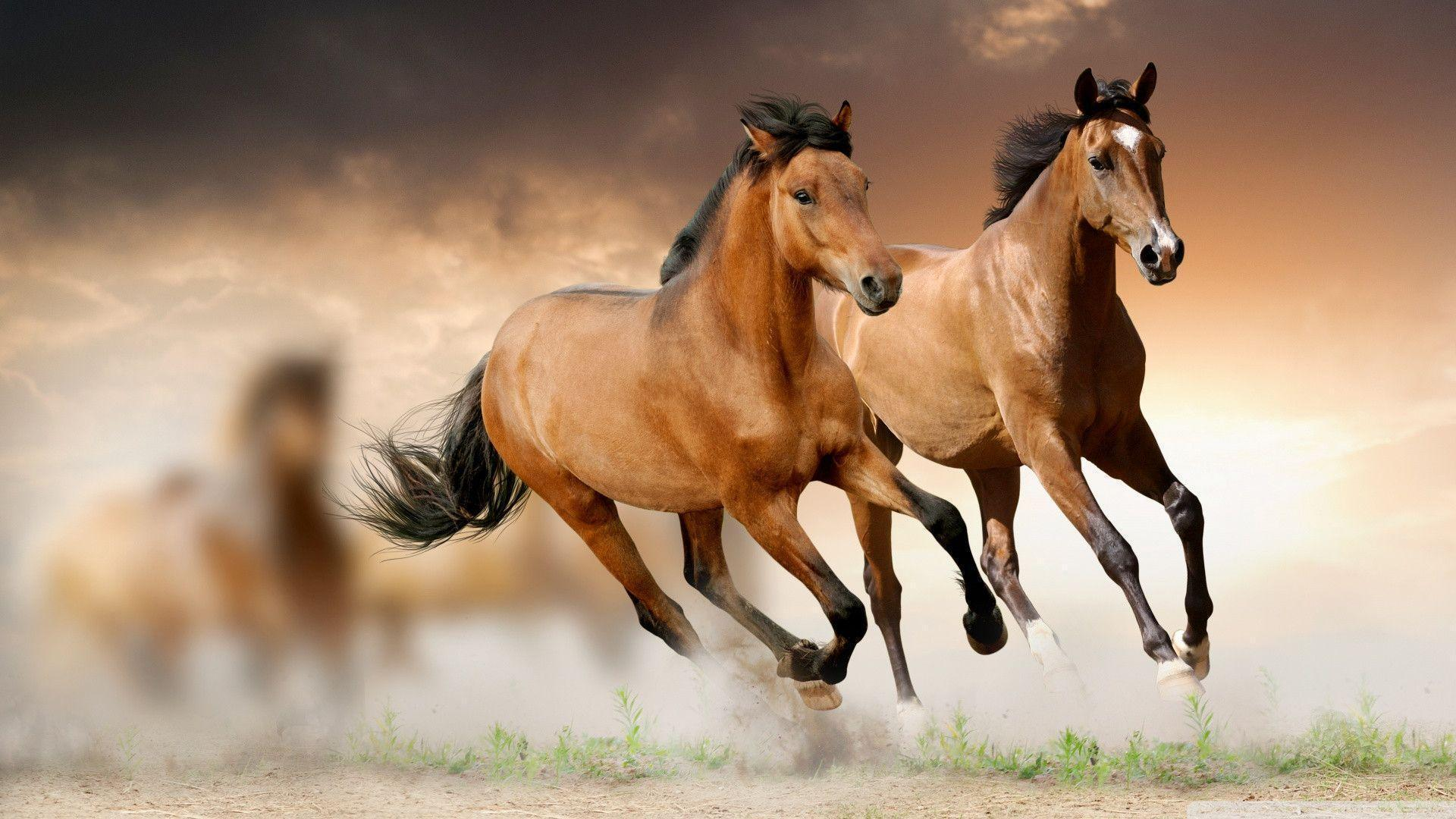 Horses Wallpapers Free Wallpaper Cave