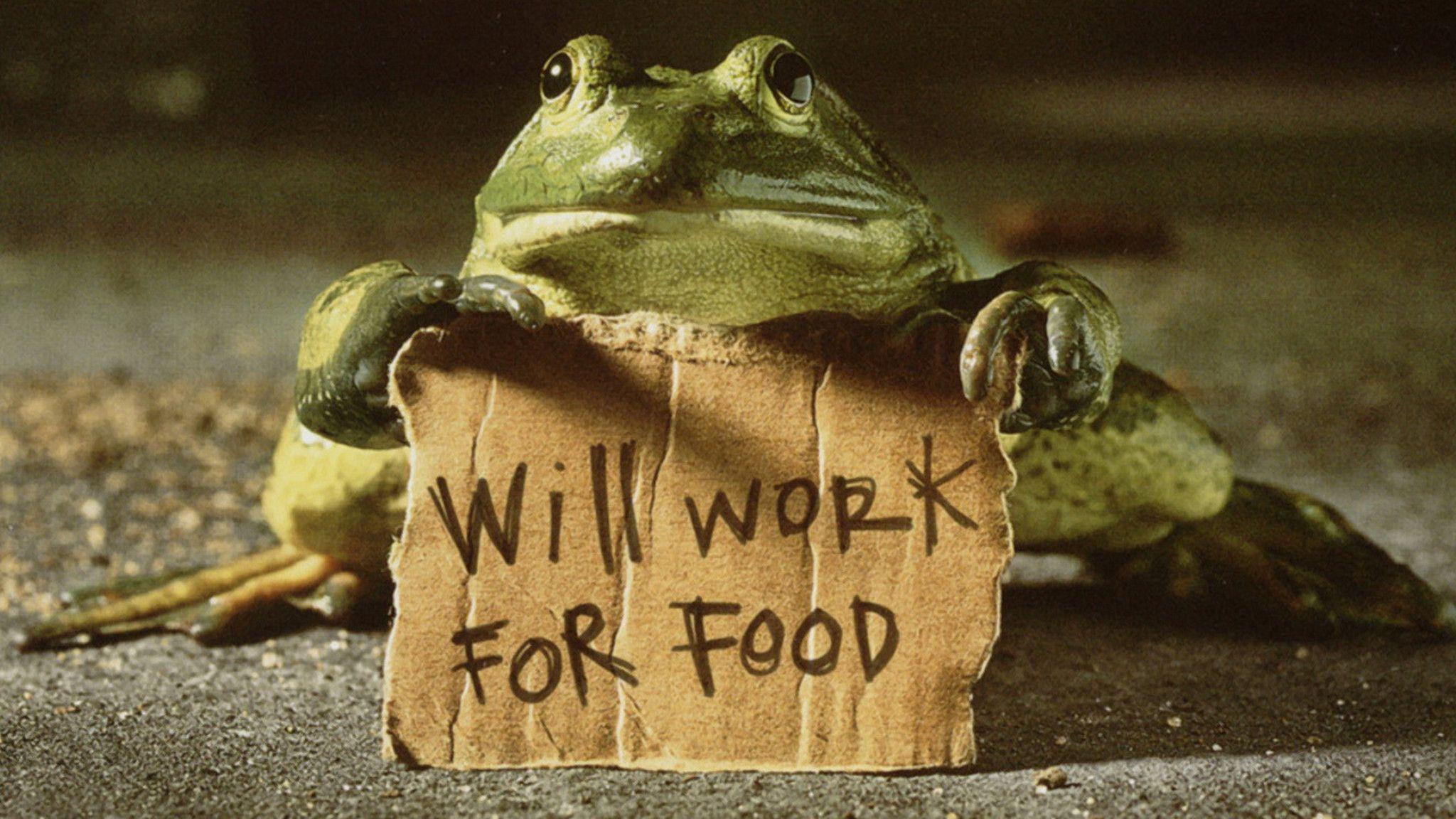 Wallpaper download pagalworld - 3d Funny Frog Will Get Job Wallpaper 15667 Wallpaper Best