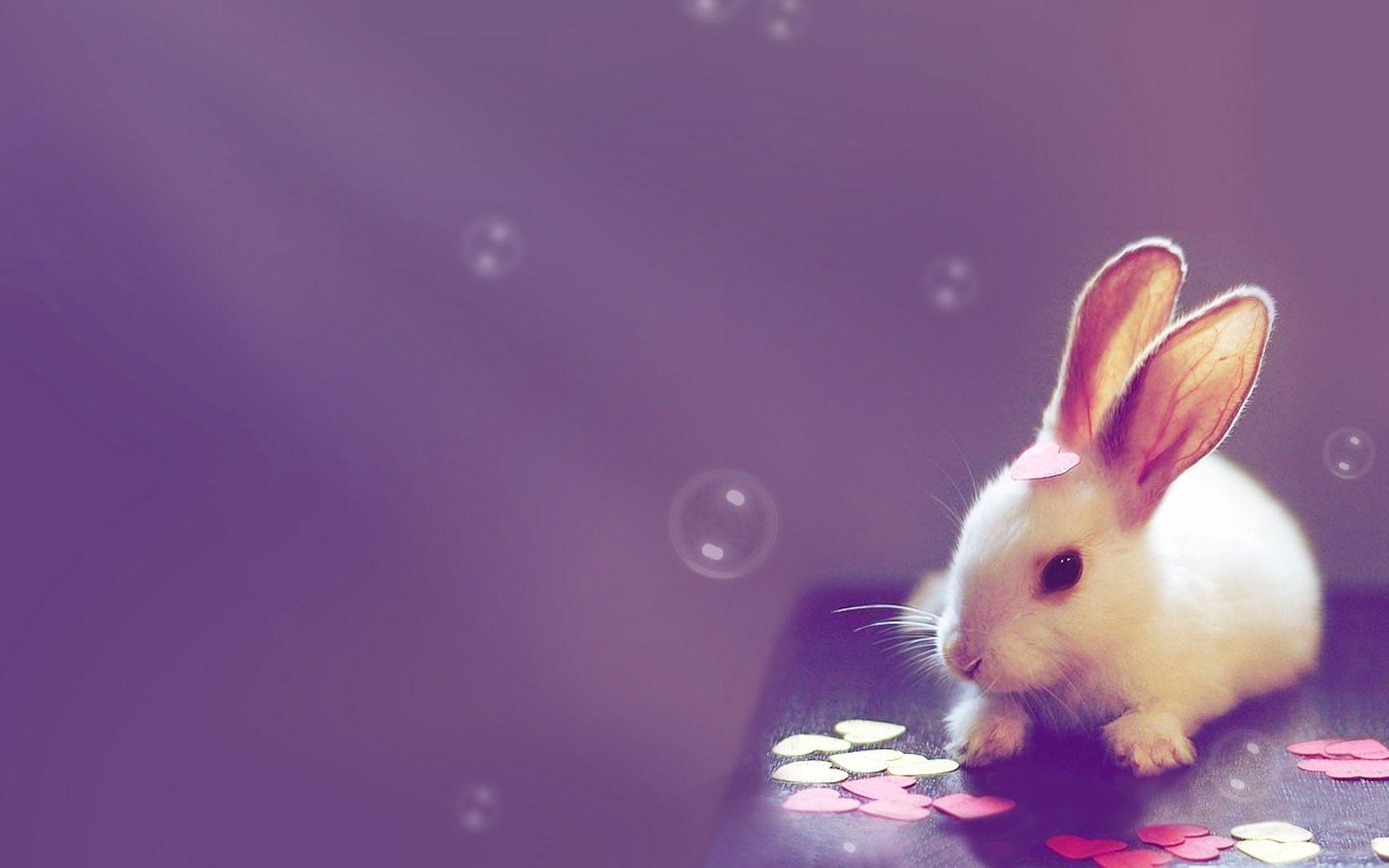 Cute Bunny Desktop And Mobile Wallpaper Wallippo
