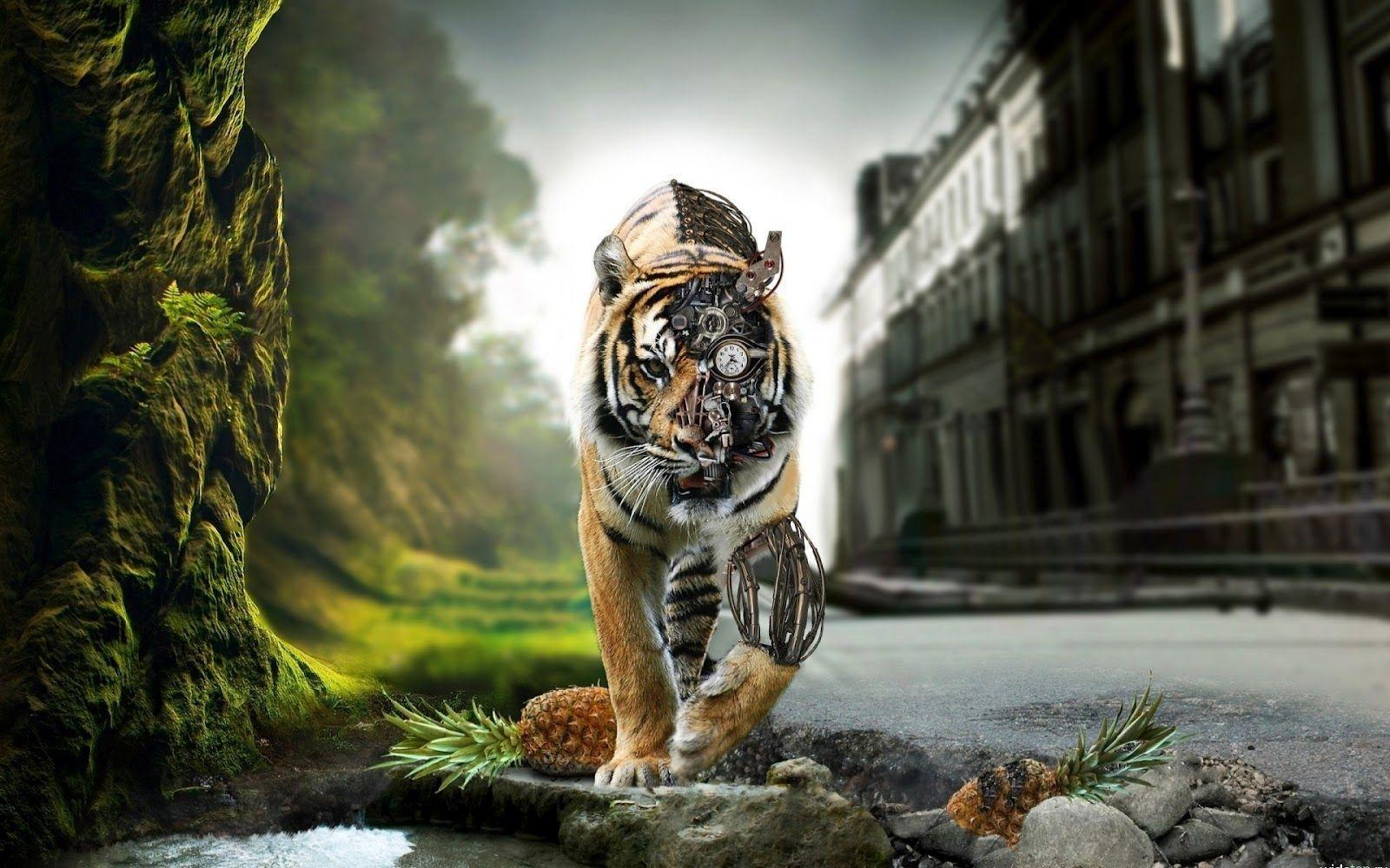 Wallpapers For > Tiger Wallpapers Hd For Desktop