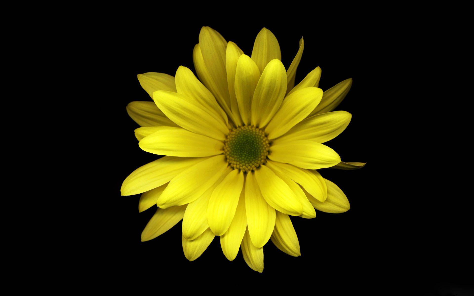 Free Desktop Wallpapers Flowers - Wallpaper Cave Yellow Black Flowers Wallpaper