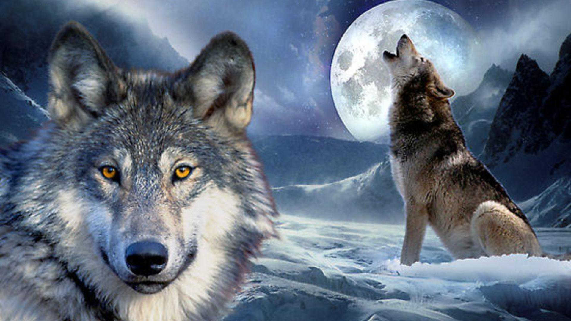 black wolf howling wallpaper - photo #38