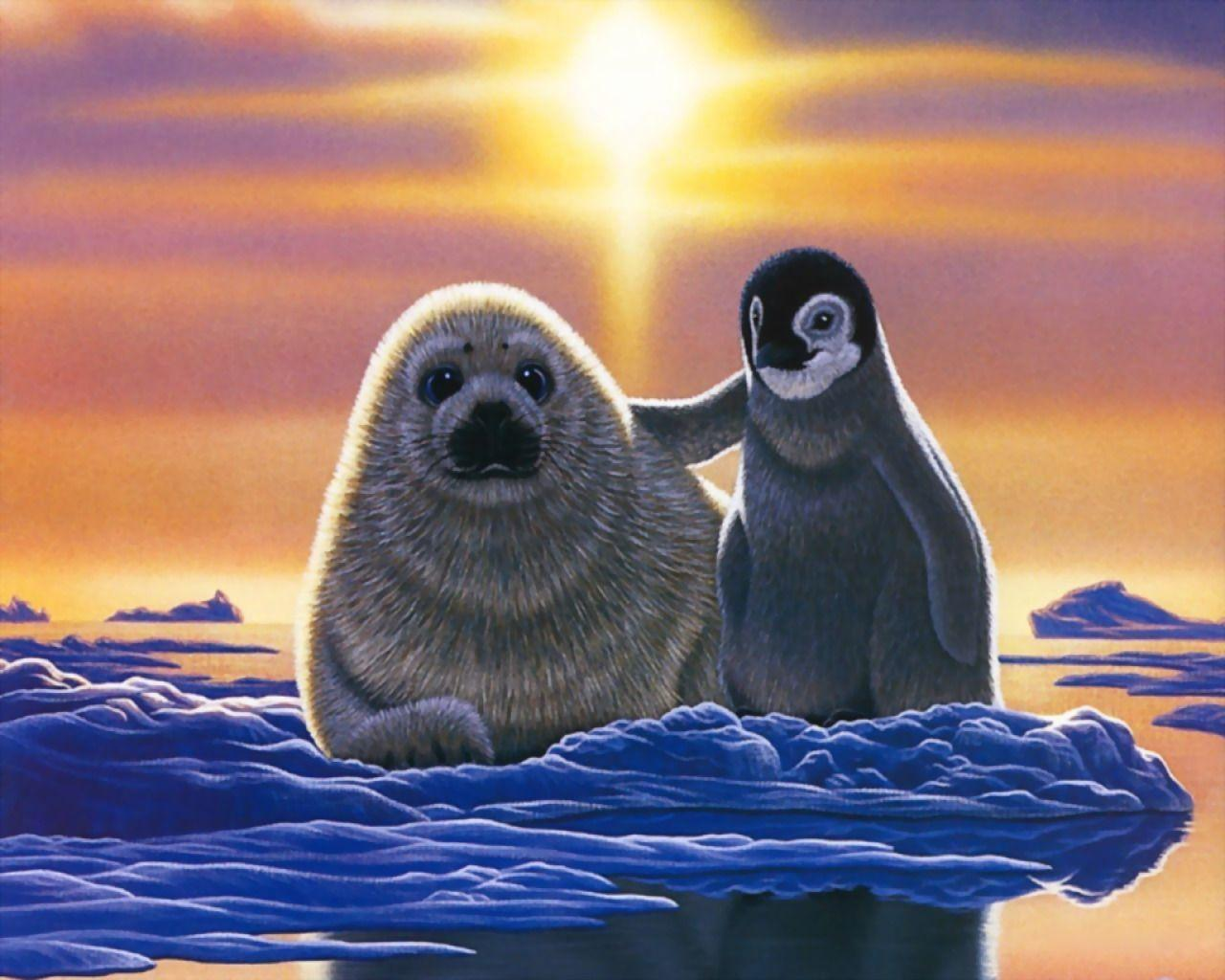 Baby Seal Wallpapers -...